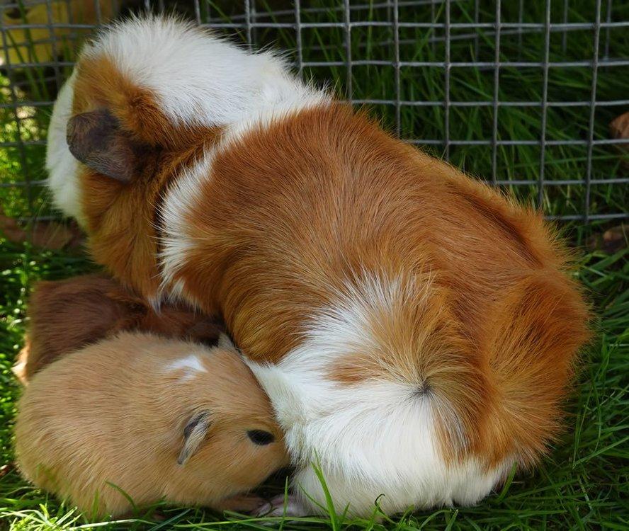 new_pigs_on_lawn.thumb.jpg.46c9267ec04f501d6e8a5af250723cd6.jpg