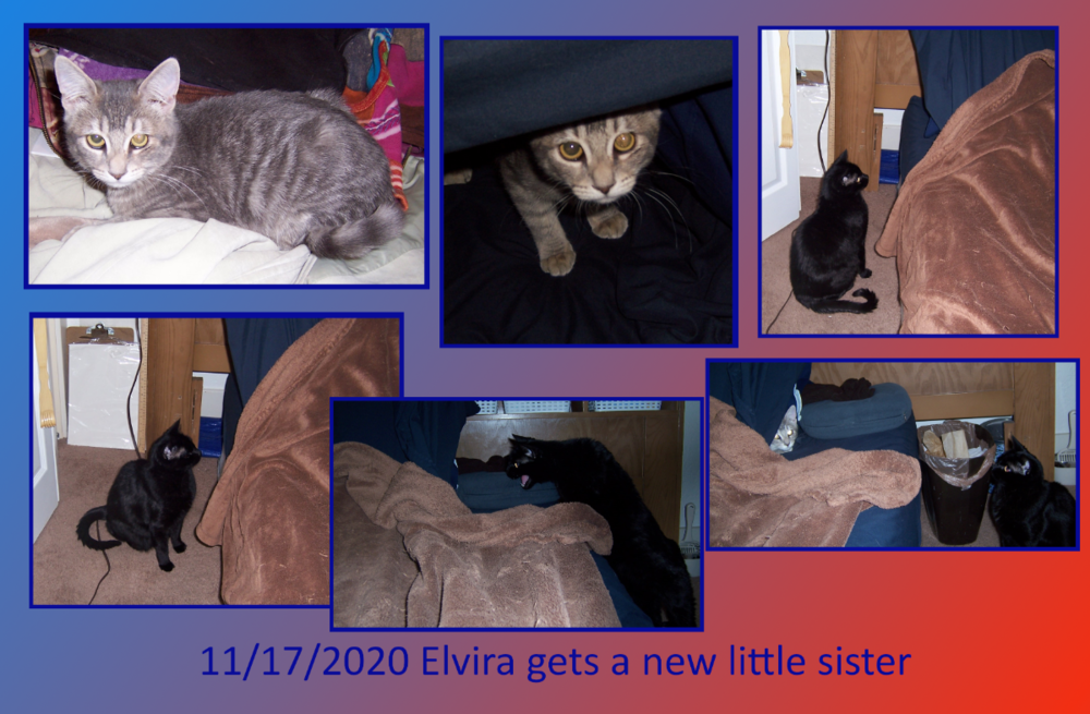 Elvira's new little sister.png